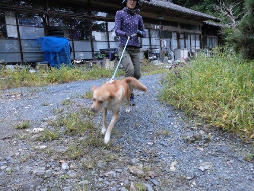 犬猫牛まつり 7:泥の重さ_a0180681_1541535.jpg