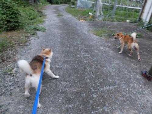 犬猫牛まつり 7:泥の重さ_a0180681_1542973.jpg