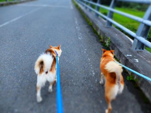 犬猫牛まつり 7:泥の重さ_a0180681_1554023.jpg