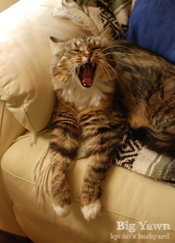 猫のあくび写真の撮り方_b0253205_10395842.jpg