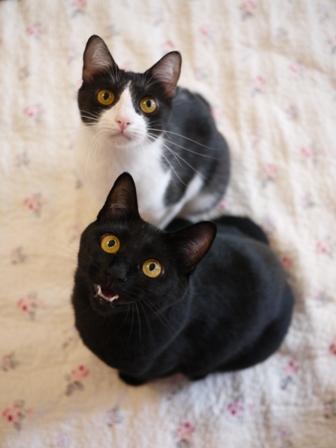 いってらっしゃい猫 てぃぁらみるきぃ編。_a0143140_21422161.jpg