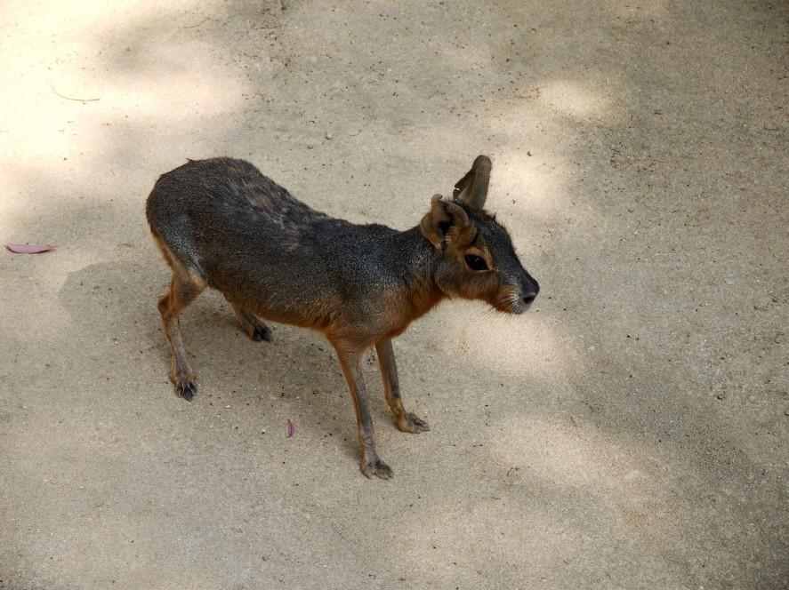 和歌山公園動物園_b0093754_1615832.jpg