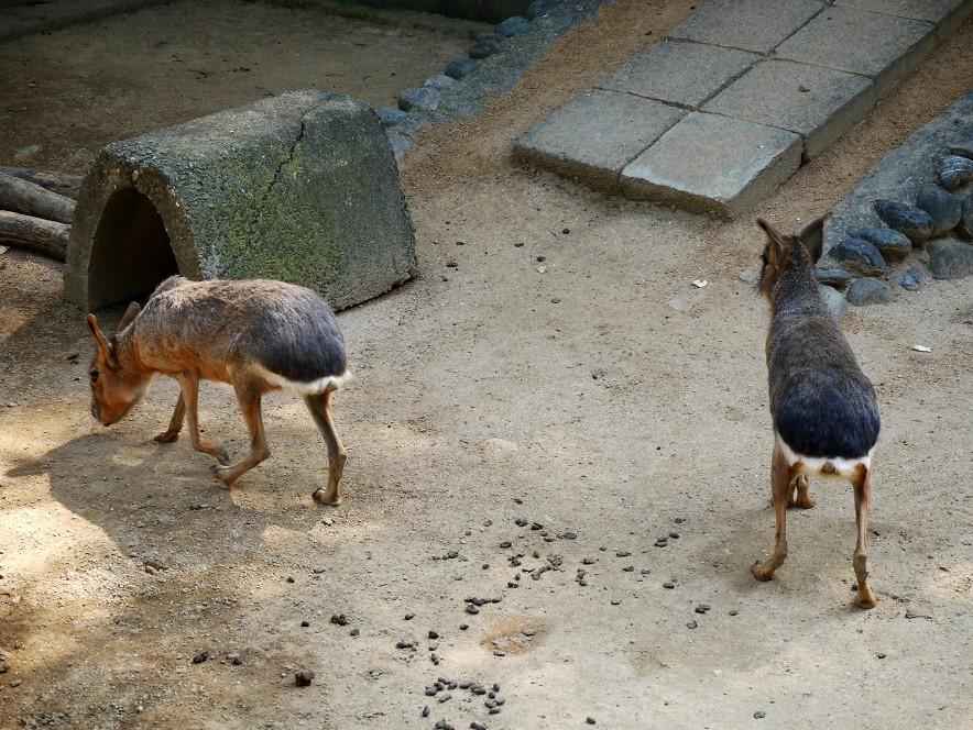 和歌山公園動物園_b0093754_1622538.jpg