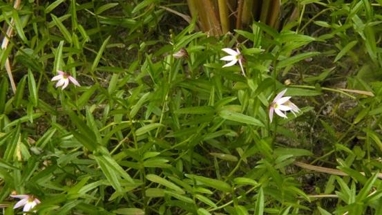 九住の花たち_b0214473_20203933.jpg