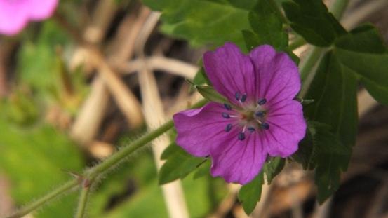 九住の花たち_b0214473_2054691.jpg