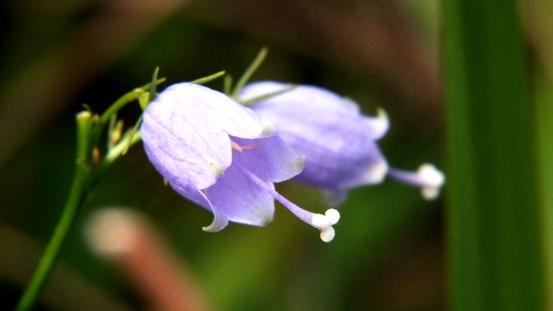 九住の花たち_b0214473_2064250.jpg