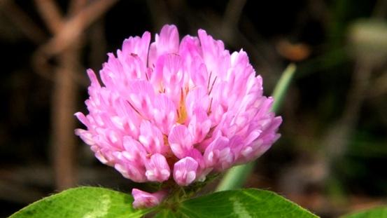 九住の花たち_b0214473_2073958.jpg