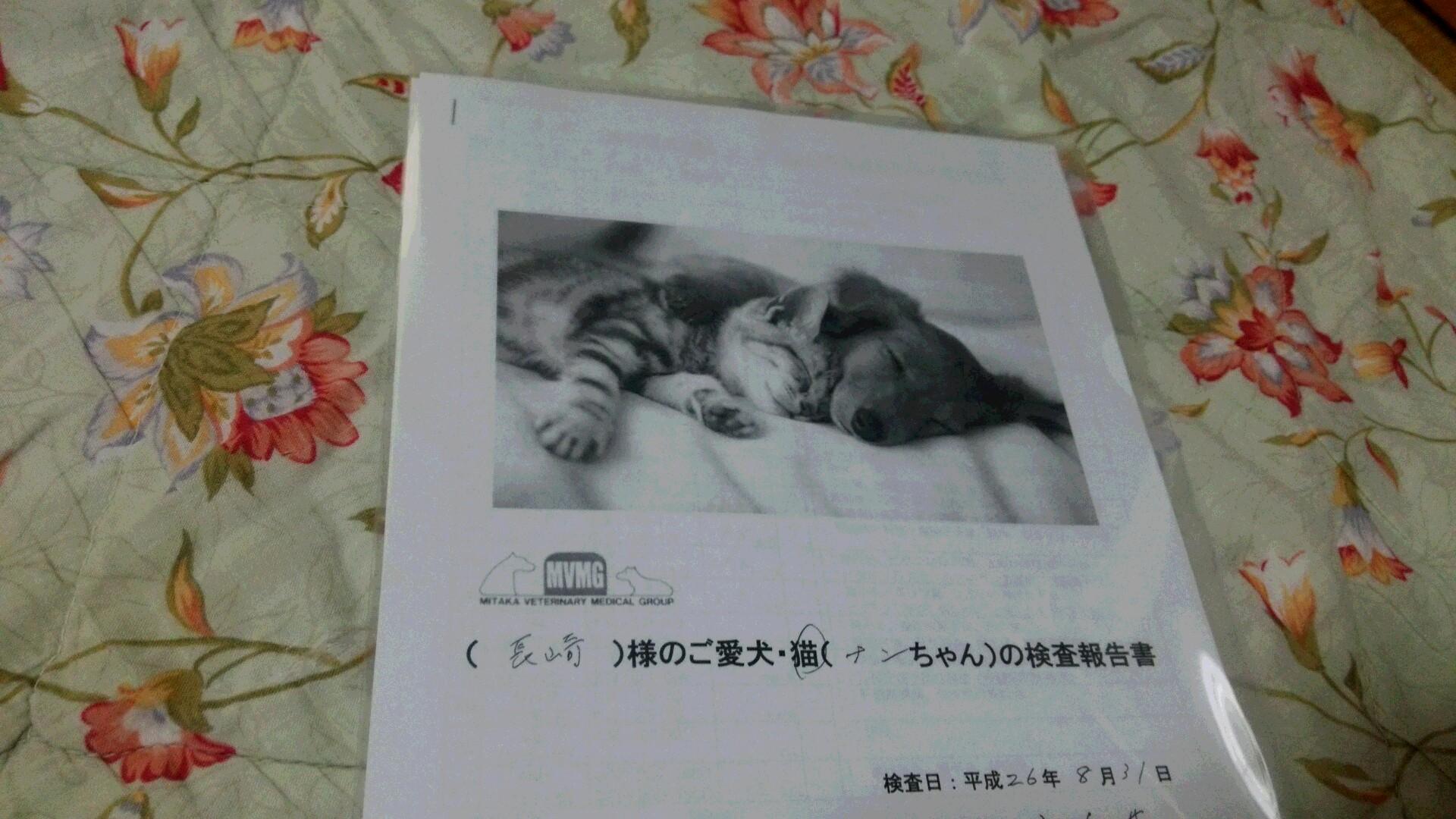 ナンちゃんの入院_e0115693_17163428.jpg