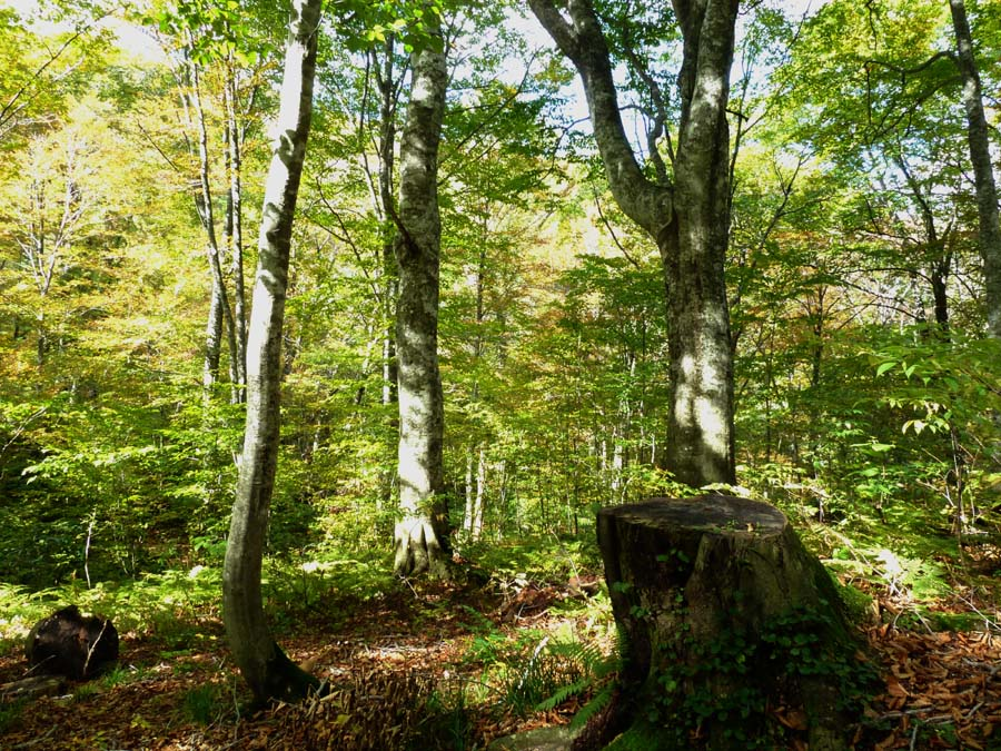 「岳岱自然観察教育林」で_f0150893_20225199.jpg