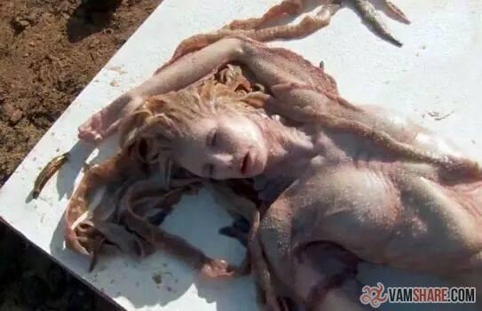ブルガリアのローレライ?:ブラダヤ川で「美人の人魚」が打ち上がった!:_e0171614_9323238.jpg