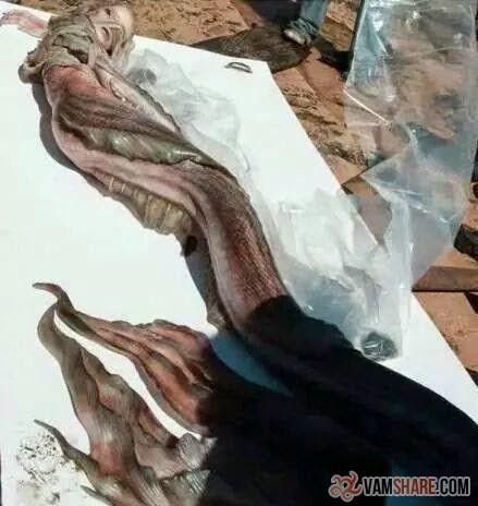 ブルガリアのローレライ?:ブラダヤ川で「美人の人魚」が打ち上がった!:_e0171614_9331047.jpg