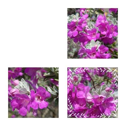 f0031546_15474532.jpg