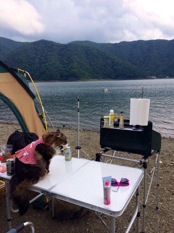 キャンプ猫☆ 西湖_c0151965_13545391.jpg