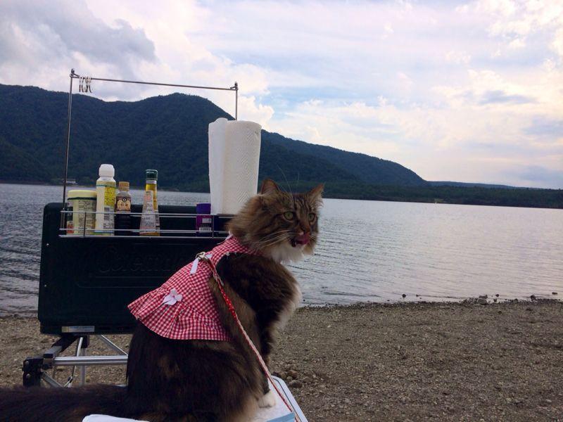 キャンプ猫☆ 西湖_c0151965_13545583.jpg