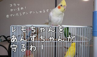 c0322903_19280838.jpg