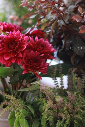 秋だもの♪ダリア_b0208604_23042822.jpg