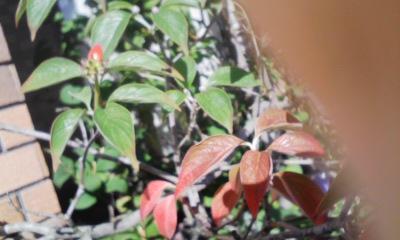 季節の移り変わりと共に 『美味しく感じられるホットコ-ヒ-』_d0144720_09384229.jpg