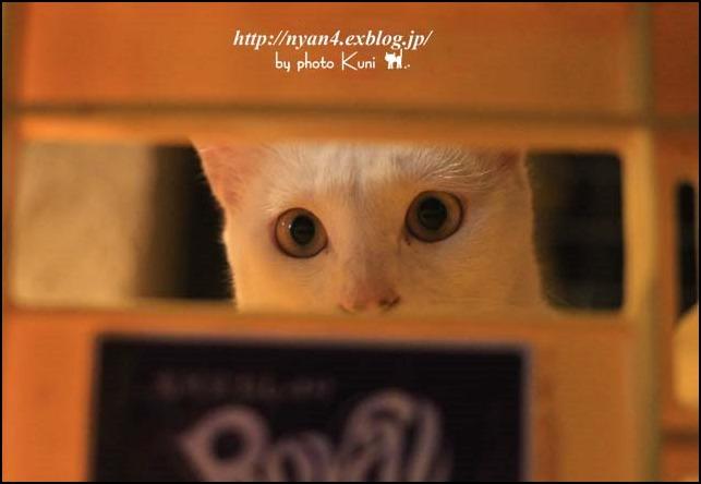 今日の白猫さん_f0166234_5143857.jpg