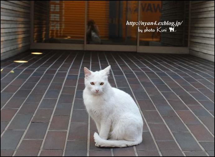 今日の白猫さん_f0166234_521137.jpg