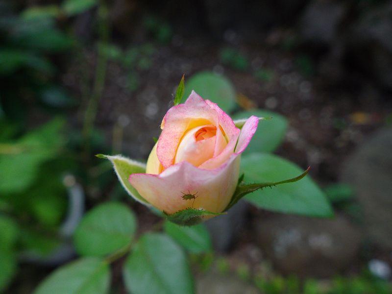 秋の庭_c0025115_21265514.jpg