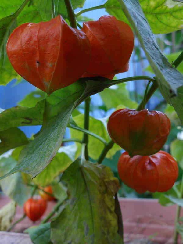秋の庭_c0025115_21362363.jpg