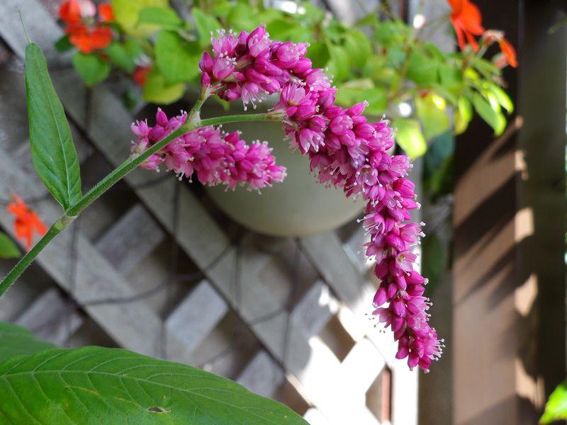 秋の庭_c0025115_21370025.jpg