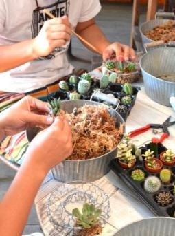 サボテン・多肉植物ワークショップのご報告_d0263815_15495341.jpg