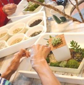 サボテン・多肉植物ワークショップのご報告_d0263815_16542346.jpg