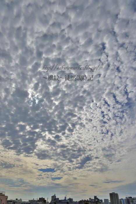 秋空に浮かぶ高積雲。_f0235723_2052690.jpg