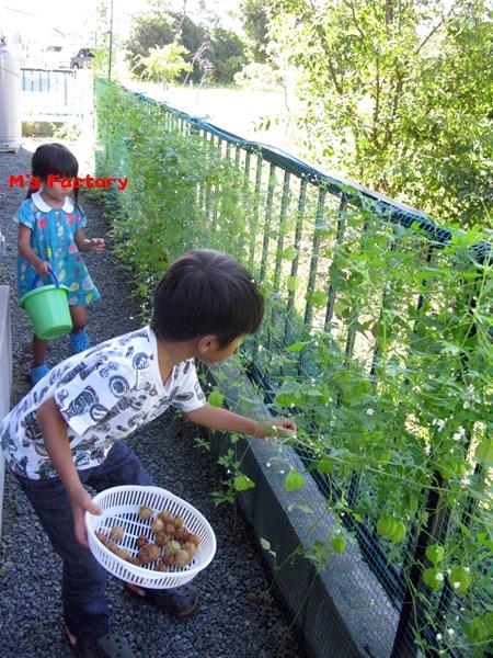 秋の収穫_f0129726_2147568.jpg