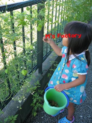 秋の収穫_f0129726_21483818.jpg