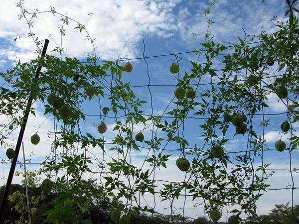 秋の収穫_f0129726_21514150.jpg