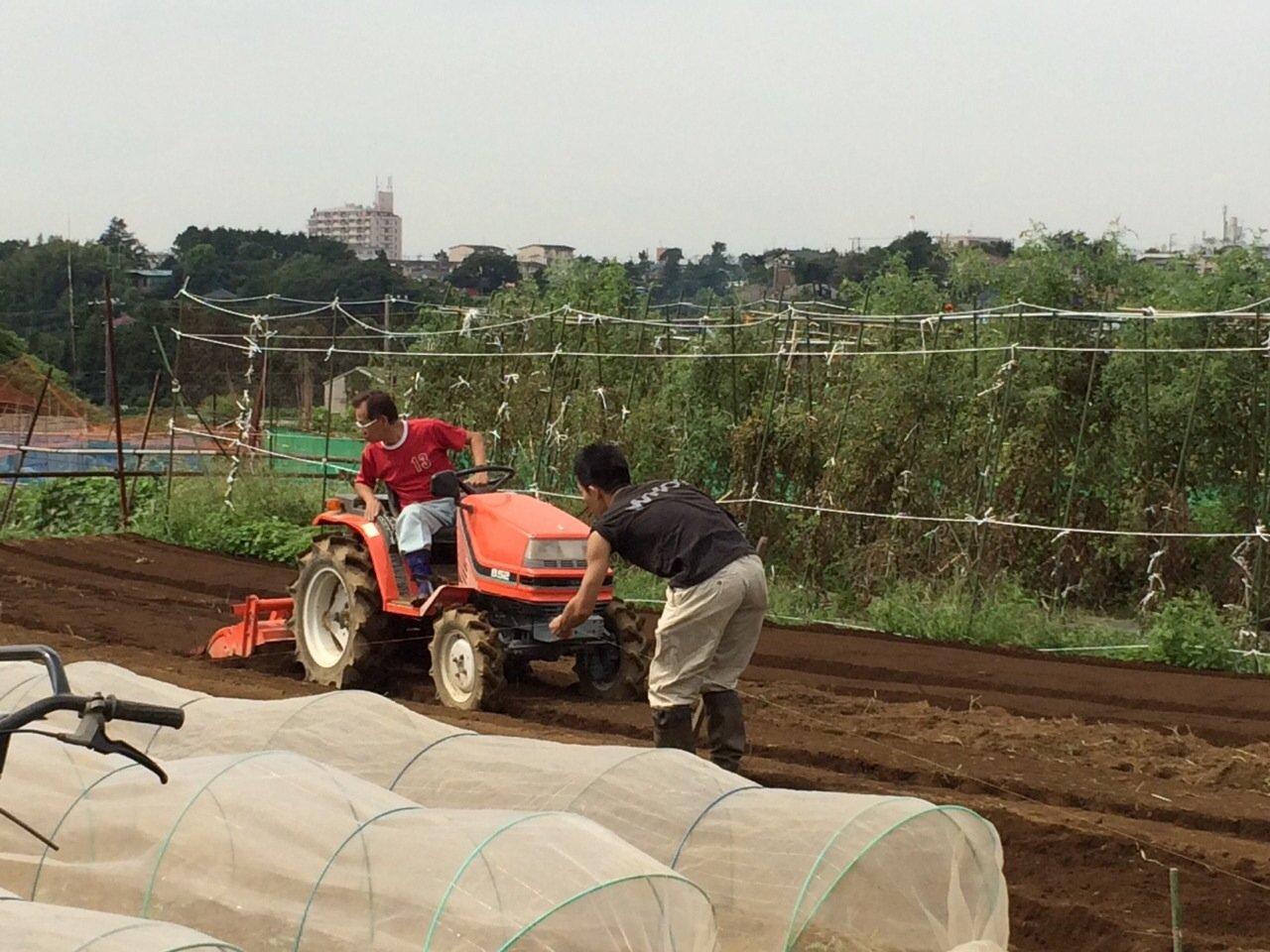 今朝は カリフラワーの定植とネキリ虫にやられた5株のブロッコリーを予備の苗に切り替えです_c0222448_15454232.jpg