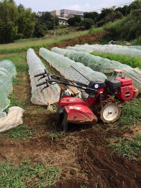 今朝は カリフラワーの定植とネキリ虫にやられた5株のブロッコリーを予備の苗に切り替えです_c0222448_15465986.jpg