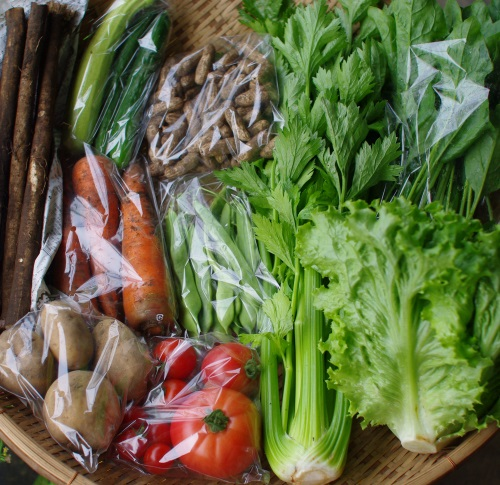 今週の野菜セット(9/16~9/20着)_c0110869_12495035.jpg