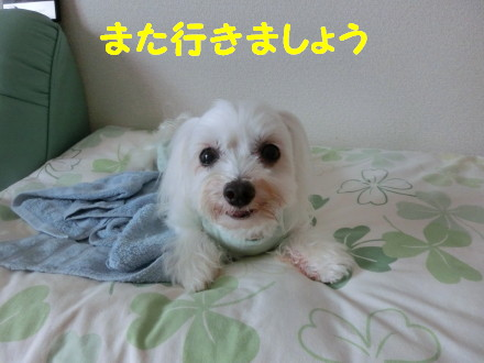 b0193480_15391728.jpg