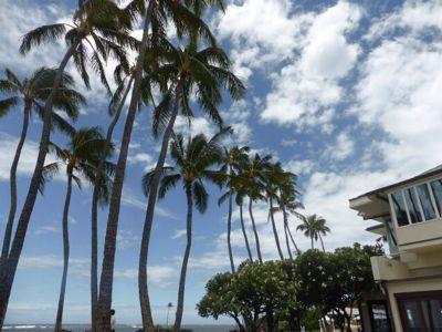 14年7月ハワイ 25★夕食はあっさりと、うどん!_d0285416_19331676.jpg