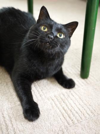 猫のお友だち ポーくん編。_a0143140_2242591.jpg