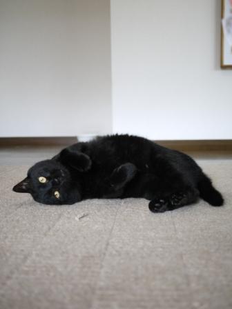 猫のお友だち ポーくん編。_a0143140_22443988.jpg
