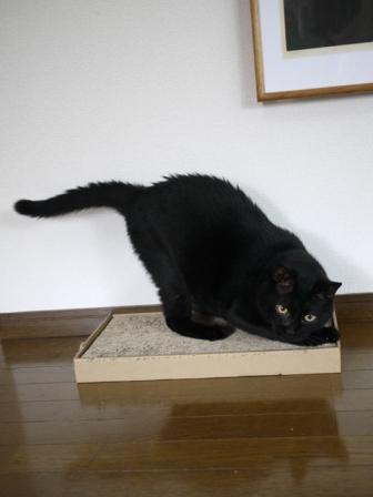 猫のお友だち ポーくん編。_a0143140_22452363.jpg