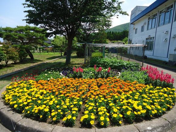 第22回 学校花壇コンクール受賞校をご紹介します_e0145841_1124220.jpg