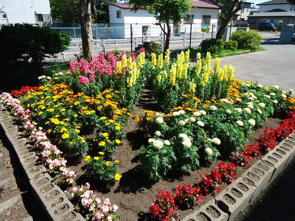 第22回 学校花壇コンクール受賞校をご紹介します_e0145841_1223889.jpg