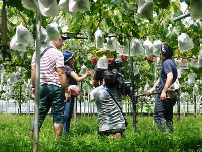 熊本ぶどう 社方園 ピオーネ、シャインマスカットの最強コンビがいよいよファイナルです!!_a0254656_17542535.jpg