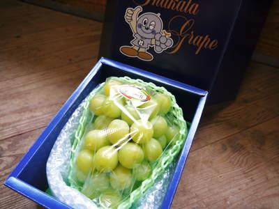 熊本ぶどう 社方園 ピオーネ、シャインマスカットの最強コンビがいよいよファイナルです!!_a0254656_19131617.jpg