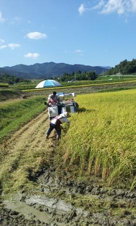 収穫の秋 ~今年の収穫高は~_f0163105_16203123.jpg
