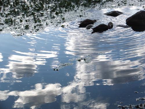 旅先の風景:2014年夏・諏訪(3)_f0155808_1041588.jpg