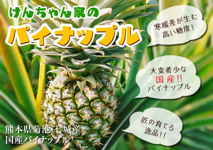 熊本産パイナップル 9月18日(木)テレビタミンで「田代農園」さん生中継決定!!_a0254656_1653364.jpg