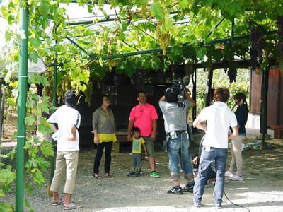 熊本産パイナップル 9月18日(木)テレビタミンで「田代農園」さん生中継決定!!_a0254656_1774680.jpg