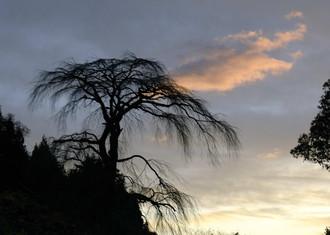 木曾の御岳山_c0330563_16173689.jpg