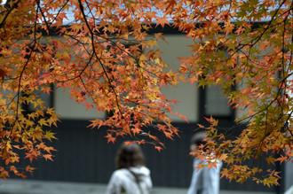 秋を覗く_c0330563_1618227.jpg